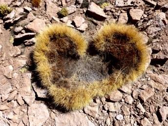 Herz mit Vizcachakot-Füllung
