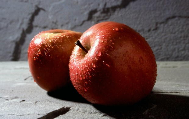 Kultur og Fritidsudvalget afviste at give økonomisk støtte til en æble festival på Tuse Næs. Foto: Scott Bauer USDA ARS