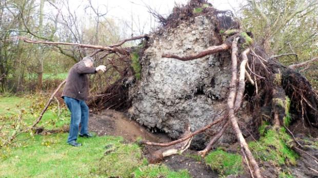 Det var så det træ! Foto: Jesper von Staffeldt.
