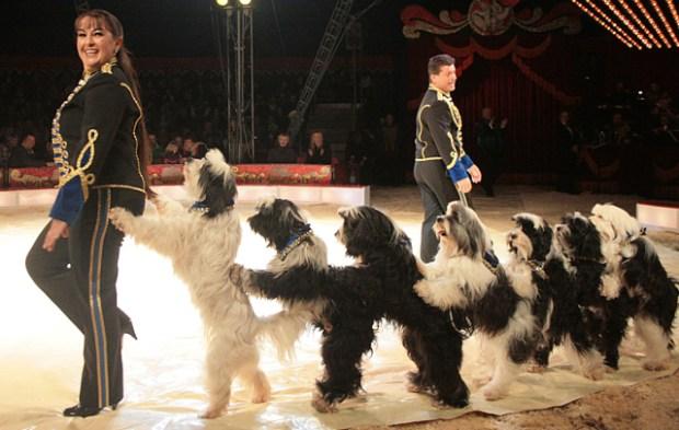 Josephine Igen med de herlige hunde. PR Foto: Cirkus Baldoni