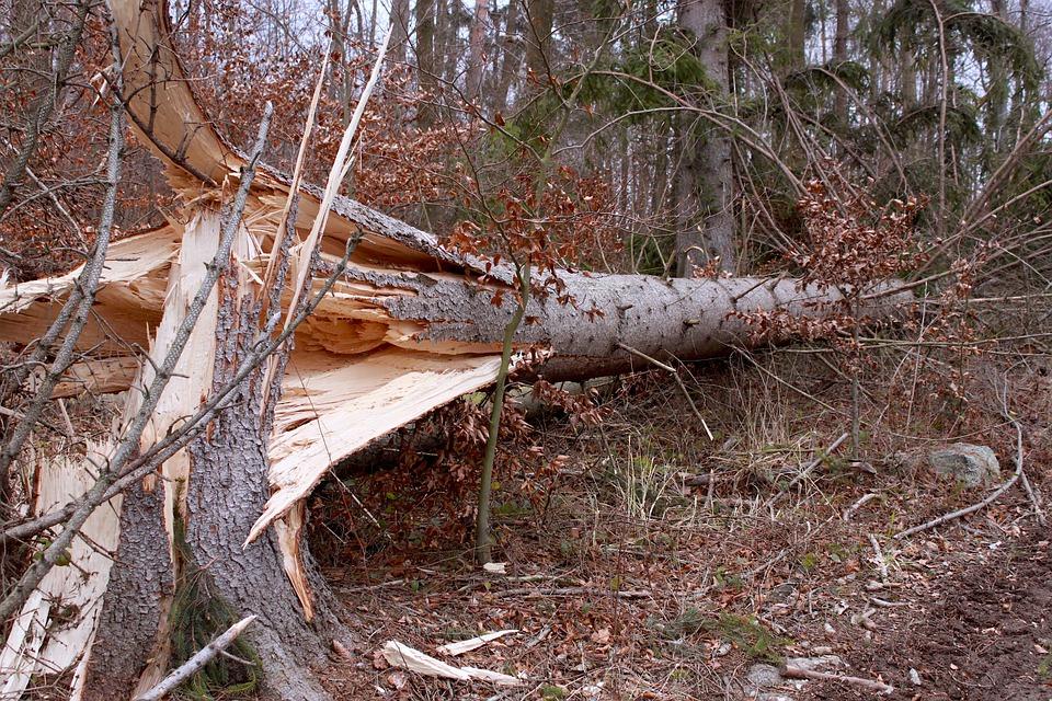 Blæsten væltede flere træer