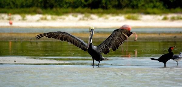 Birdwatching and Kayaking