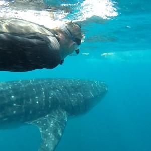 Whale Shark Tours