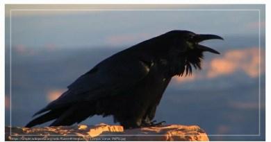 E. A. Poe: A Holló