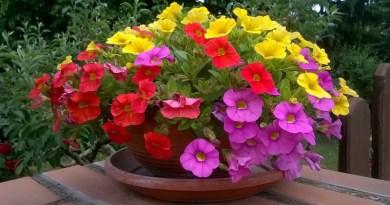 Anyám kertje