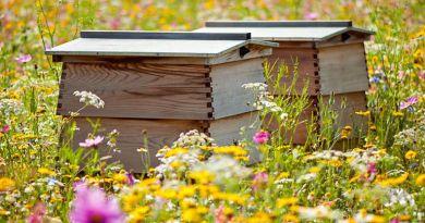 Méhek szakmunkás bizonyítvánnyal