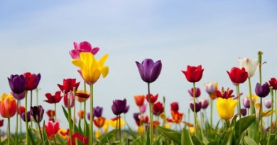 Szedjétek fel a tulipánhagymákat!