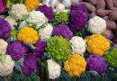 Leánykonyha – karfiolos izéke
