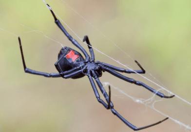 Egy srác mert nagyot álmodni – gázlánggal indult harcba a pókok ellen