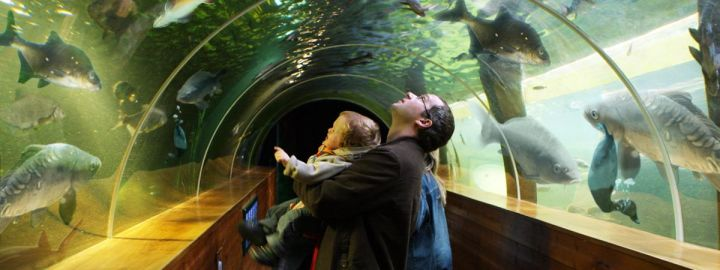 underwater-tunnel