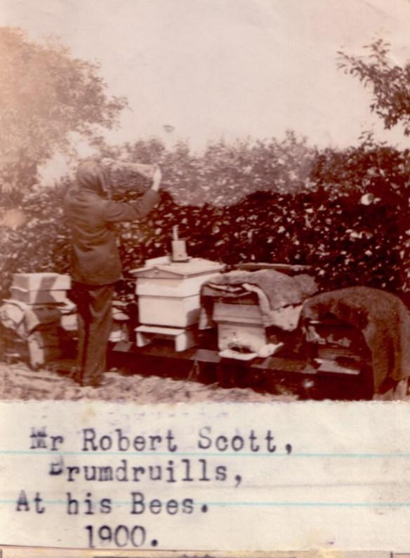 at-his-bees-1900-rbt-scott-drumdruills