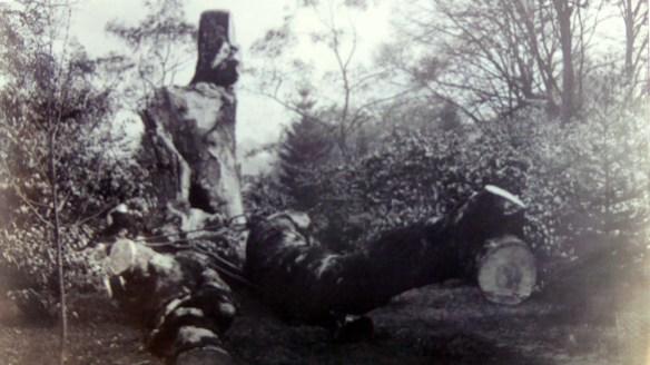 kippenross-plane-tree-3
