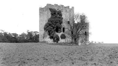 Haining - Almond Castle (9)