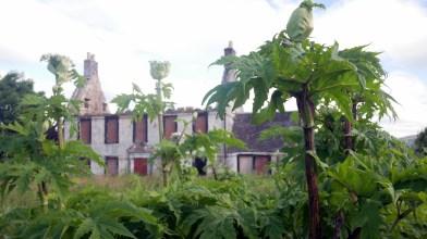 Borrowmeadow farm, Friday 22 June 2018 (2)