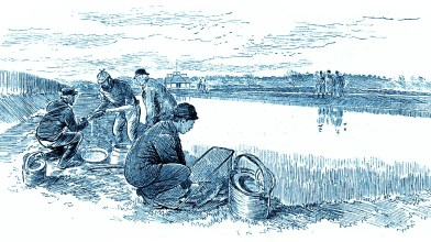 Howietoun 1886a