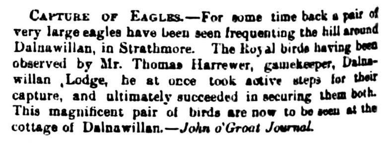 Dalnawillan, 1865, capture of Eagles