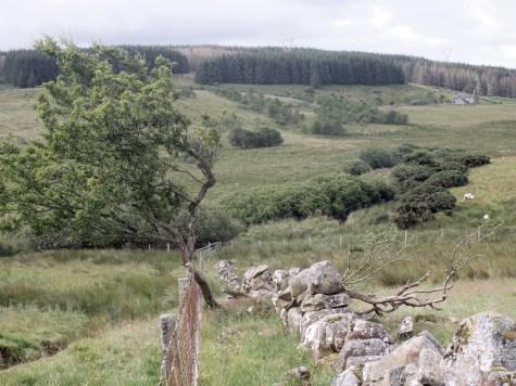 Glenour [Glenover] farm, South Ayrshire - Monday 20 July 2020 (4)