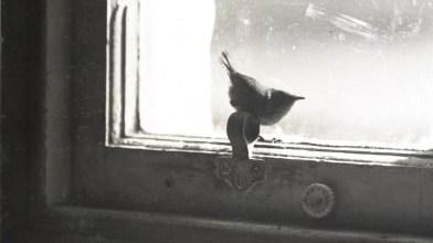 Robert Atkinson, 1938, St Kilda (1)