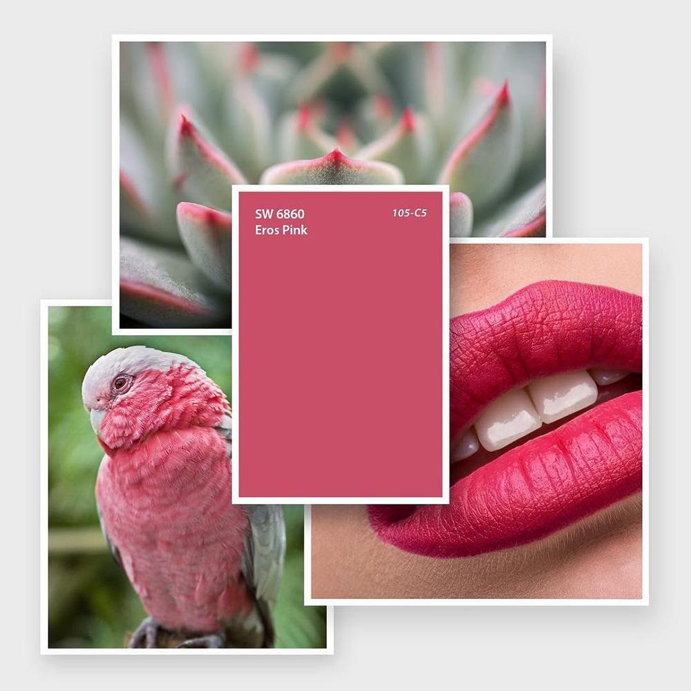 SW 6860 Eros Pink