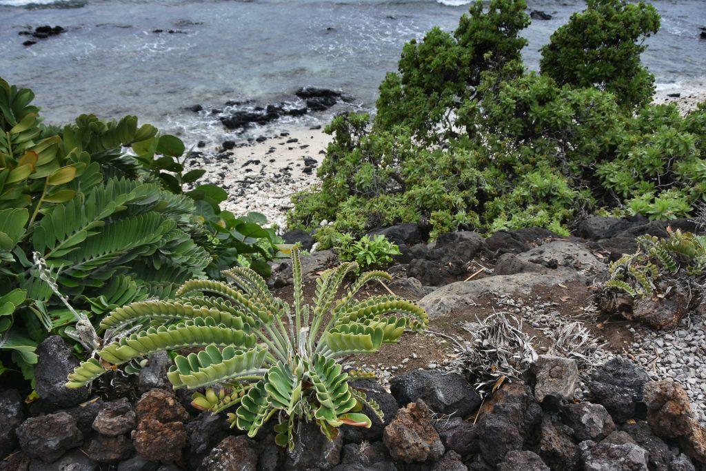 Waikoloa Beach, Big Island of Hawaii