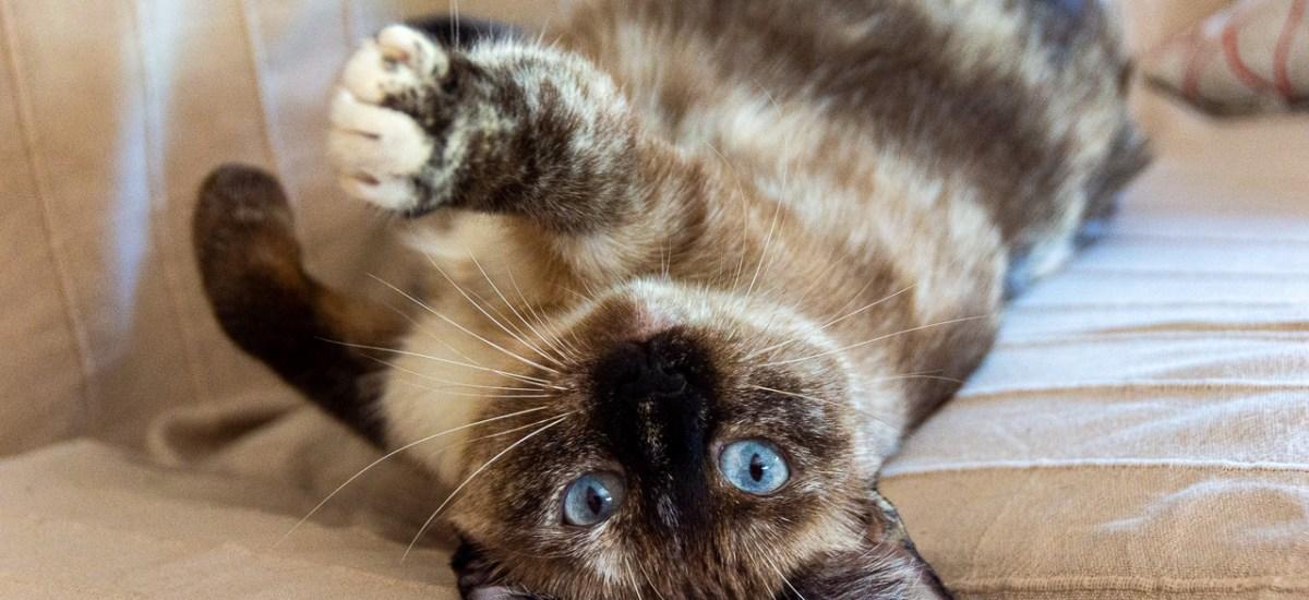 Bringing Big Aria home or: My Spanish cat adoption No. 3