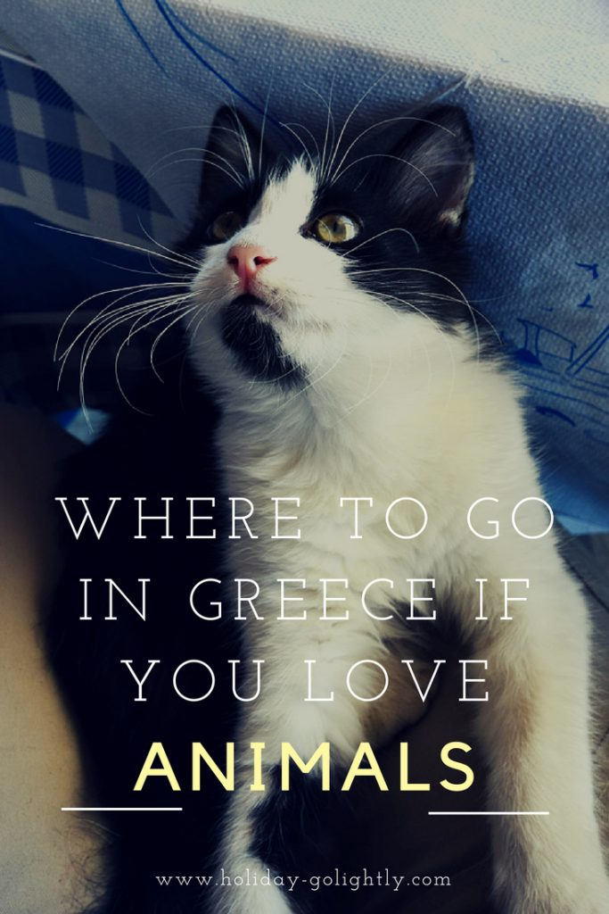 Greece for animal lovers - pin