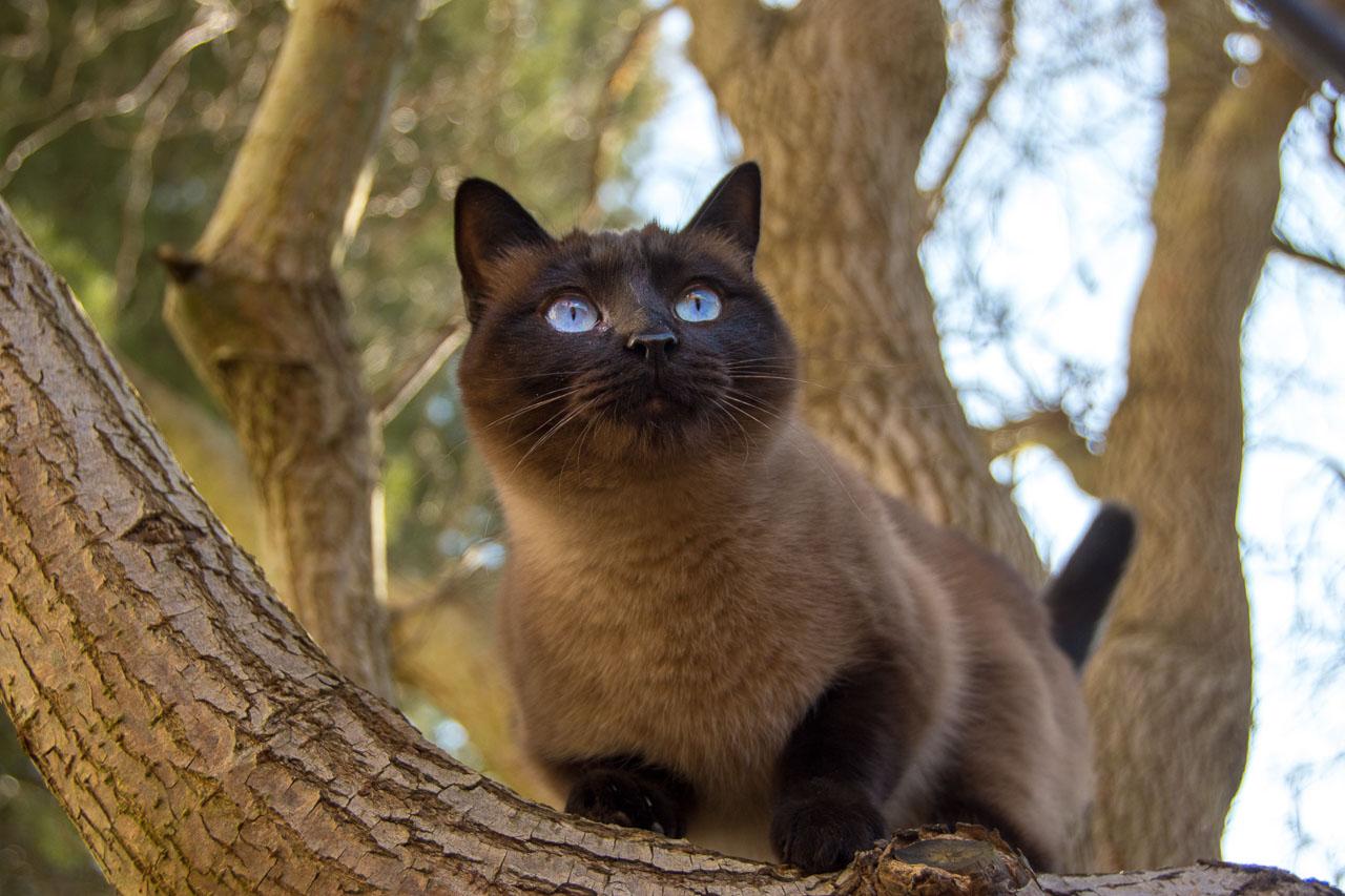 Our Jet Set Kitty: An International Pet Adoption