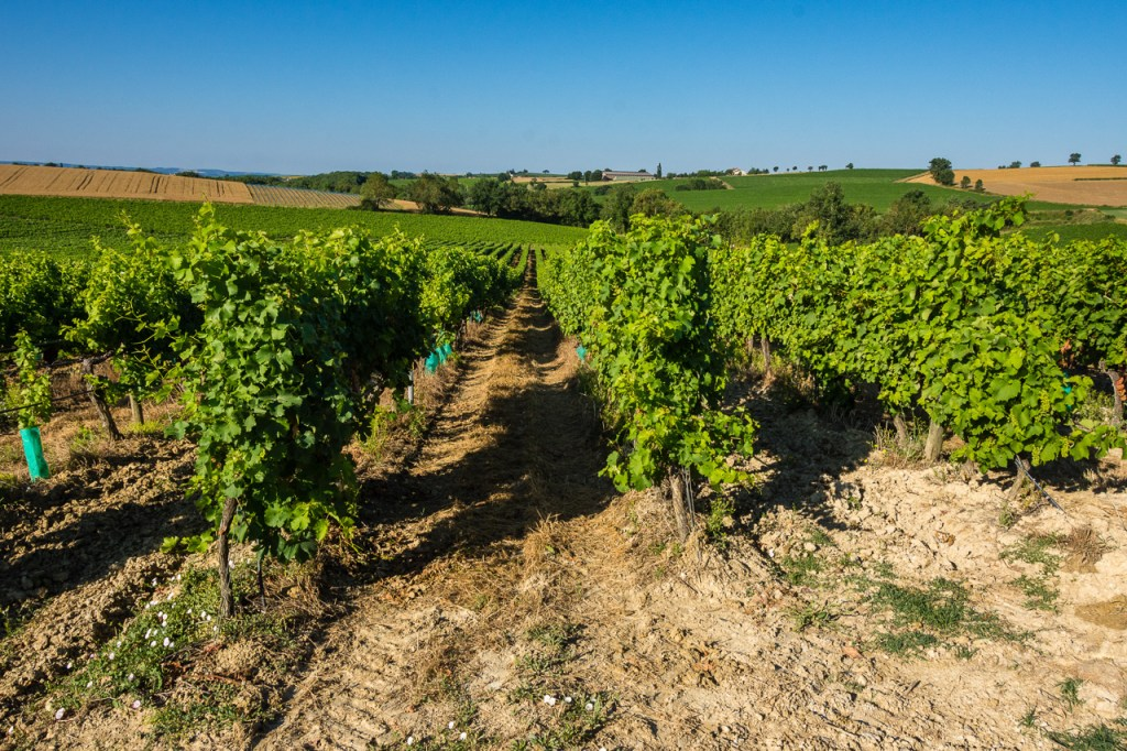 Occitanie, France, Organic winery tour in Gaillac: the vines