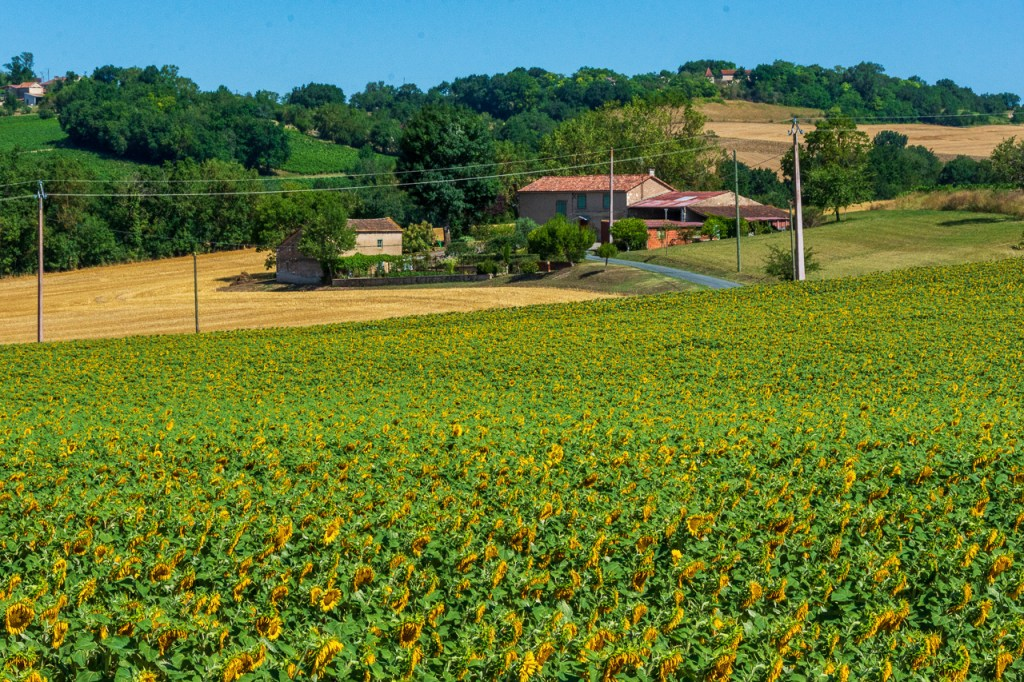 Organic winery tour in Gaillac: the beautiful landscape