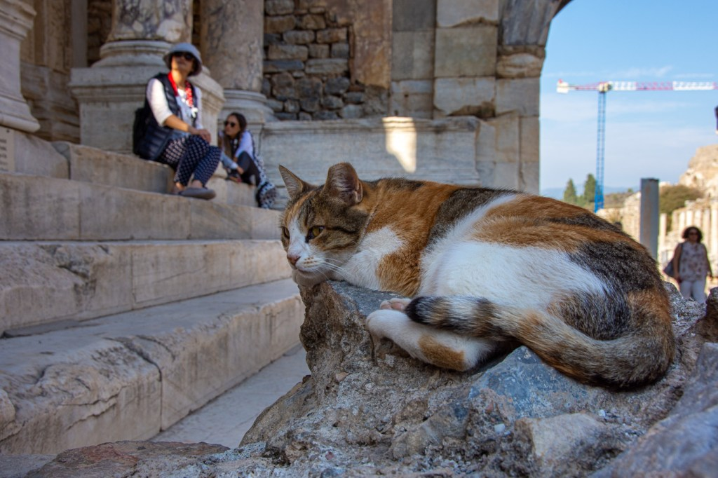 One of many cats in Ephesus