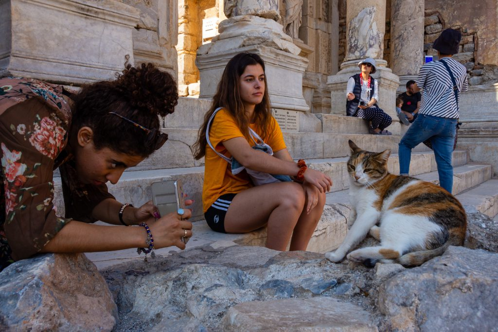 cat at the Library of Celsus at Ephesus
