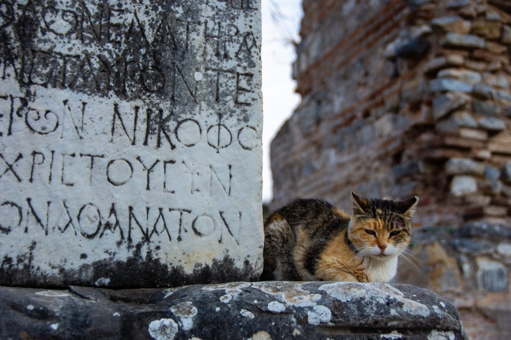 Cat at Ephesus, Turkey