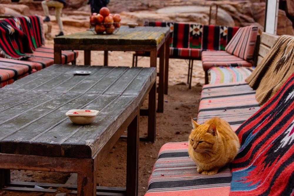 cat at an open air cafe in Petra, Jordan