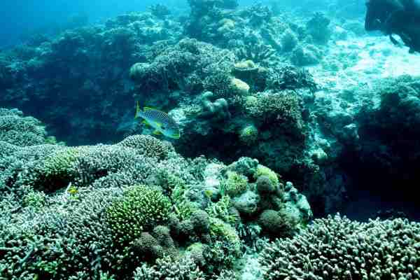7 Best Coral Reef Scuba Diving Destinations In The Philippines