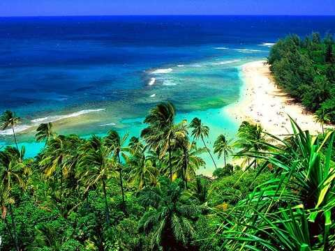 Отдых на Гавайских островах - Растительность на Гавайях