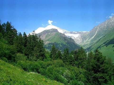 Кавказские Минеральные Воды - в горах на высоте 800—1100 м растут граб, бук, дуб