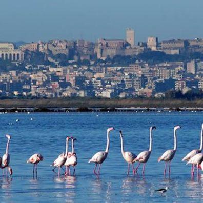 Отдых на острове Сардиния - город Кальяри Парк Молентарджус