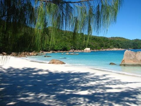 Отдых на Сейшельских островах - Праслин пляж Ансе Лацио в окружении огромных пальм