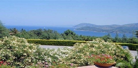 Отдых на острове Искья - обилие зелени