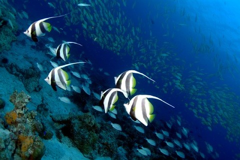 отдых на Сейшельских островах, остров Силуэт - красота и богатство подводного мира