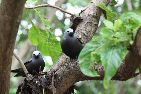 отдых на Сейшельских островах, остров Праслин - природный заповедник на острове Cousin