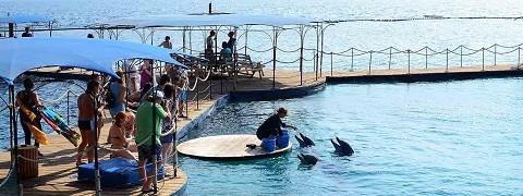 Отдых в Эйлате - дельфинарий