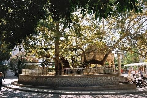 отдых на островах Греции, остров Кос, Платан Гиппократа