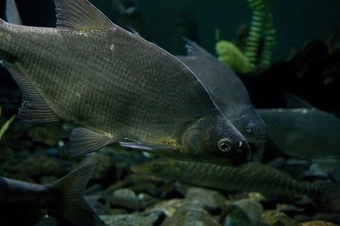Отдых на острове Ольхон - на Байкале водится множество видов рыб