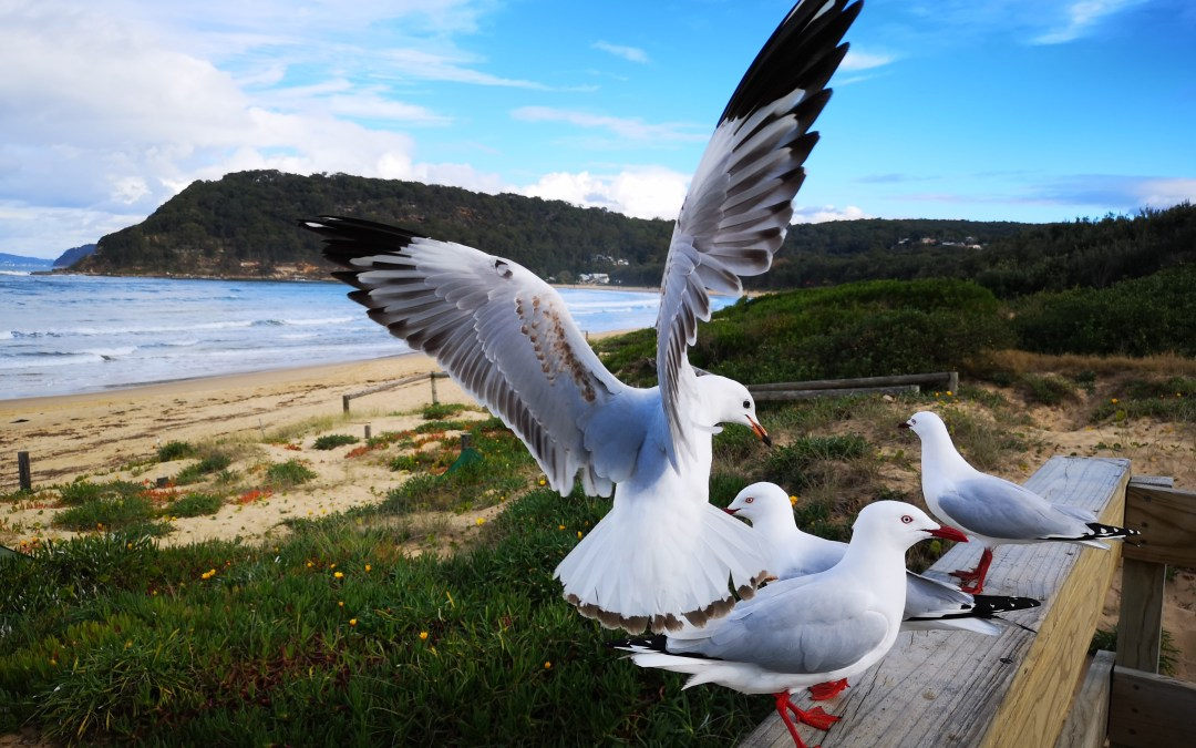 Seagulls and seascapes