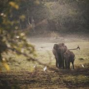 Photo for the blog post about the best places in Sri Lanka. Elephants.