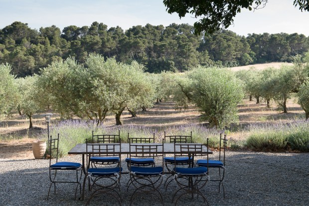 Barbeque area overlooking olive grove