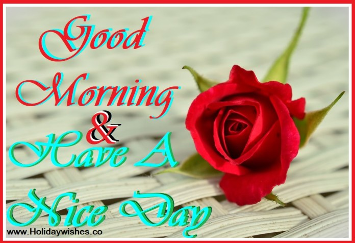 Most Beautiful Good Morning Greeting Pictures With Rose Flowers