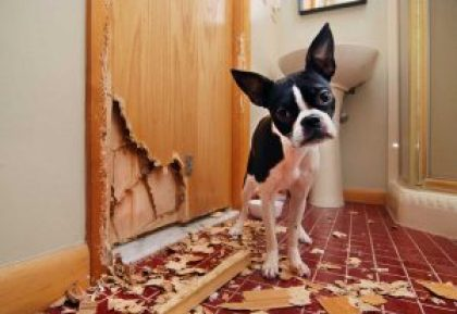 dog separation anxiety bad-doggy