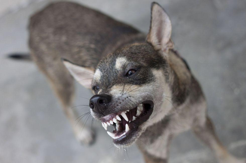 cbd oil for dog aggression